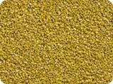 Spitzkiesel gelb